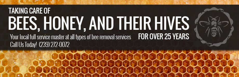 Bee Removal Company Collier County FL